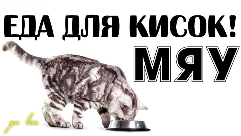 Чем нельзя кормить кошек и котят и как и чем правильно кормить котят и кошек!! | Хвостатая кухня