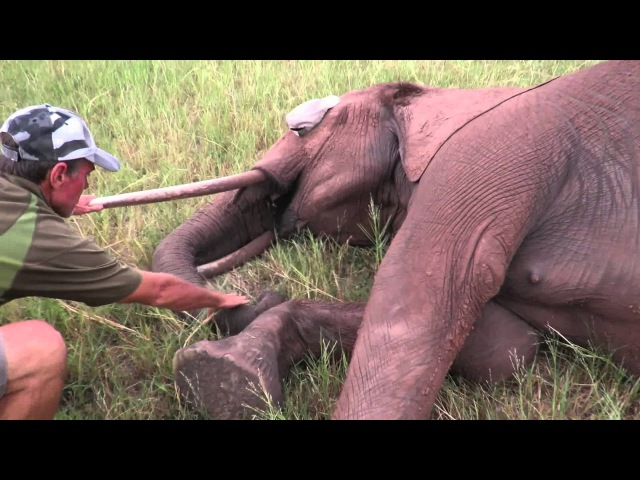 How M.A.P.P. Saved an Elephant Shared by Inspiration Zimbabwe