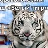 """Студенческий добровольческий отряд """"Белый тигр"""""""