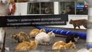 Новости на Россия 24 • Кошачий остров. Слайд-шоу ко Дню кошек