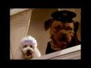 DVD-R Heaven: Tequila and Bonetti: Wonderdog