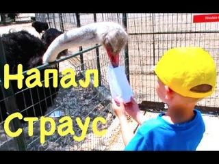 Жесть! Страус напал на ребенка Зоопарк Страусиная ферма и Долина Бабочек