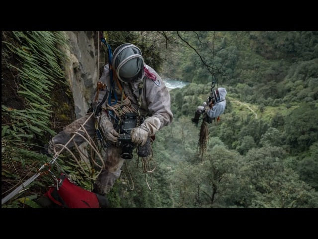 Последний собиратель мёда. Непал. National Geographic   перевод русские субтитры