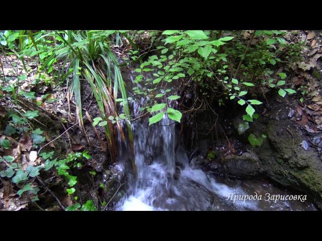 ~ Горный ручей ~ Журчание воды со Звуками природы ~ 🌿