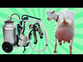 Современное фермерство: автоматическое доение, кормление, уборка. Мойка и чистка коз, оплодотворение.