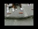 Красавцы dog yum arrow double down Подписываемся Subscribe hugging @laughlandia top top top top top laughland