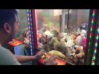 Cat stuck in a claw machine -- viralhog