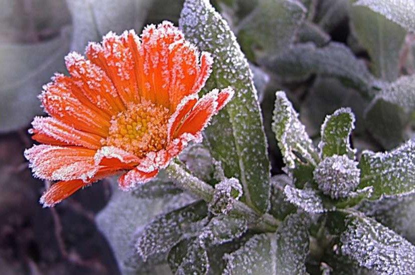 Администрация Таганрога: Экстренное предупреждение об ожидаемых заморозках