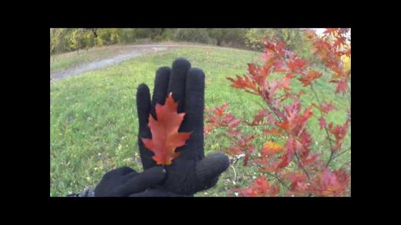 Красный дуб (red oak)