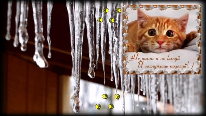 Весёлое поздравление с Днём Кошек! Песня просто класс!