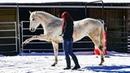 Тренинг на свободе с Хенти и Нэди Синергия с Лошадьми Гармония