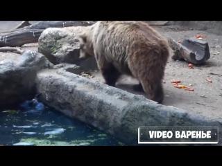 Взаимовыручка у животных (VIDEO ВАРЕНЬЕ)
