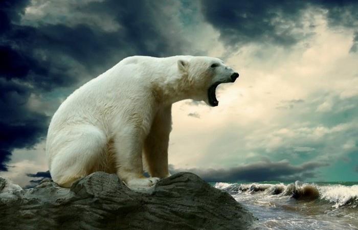 Невероятные факты об Антарктиде, которые знают немногие, изображение №10