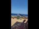 Ворона мигрантка хулиганка