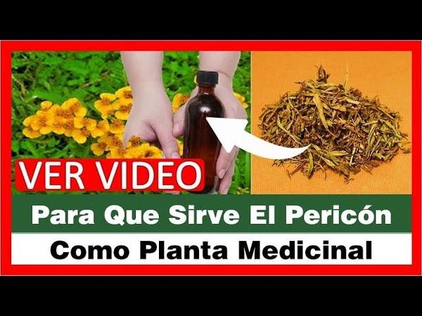Para Que Sirve El Pericon Como Planta Medicinal, Tagetes Lucida, Yerbaníz, Santa Maria, Hierba Santa
