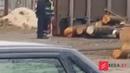Белорусский пункт назначения - Лесовоз в Ружанах опрокинулся и убил 6-месячного малыша и бабушку