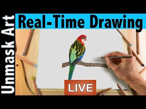 Rosella Bird in Colored Pencil Tutorial Part 2