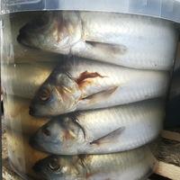 Рыбная лавка