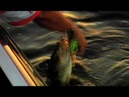 THE LONGSHANK SPINNERBAITS AND BUZZBAITS