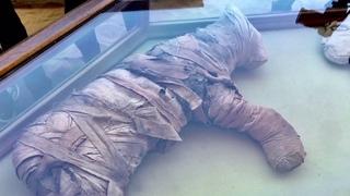 Эксклюзивное видео: мумии и статуи животных из недавно открытого тайника в Египте Exclusive Footage: Animal Mummies Cachette Di