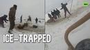Russian farmers save horses that fell through thin ice