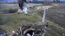 Osprey attacks Canada Geese with stick. Charlo Osprey nest . 14 April 2017