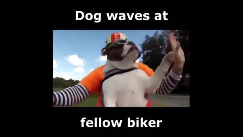 Doggo biker