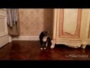 кошкабориска Как она от туда выходит, полнушка моя!