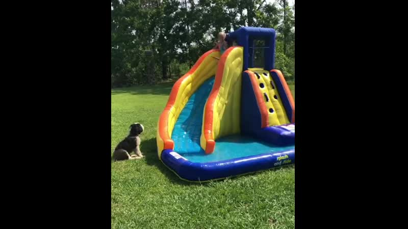 Not sure whos having more fun, the pups or the kids
