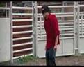 Jackass johnny knoxville bull stupid