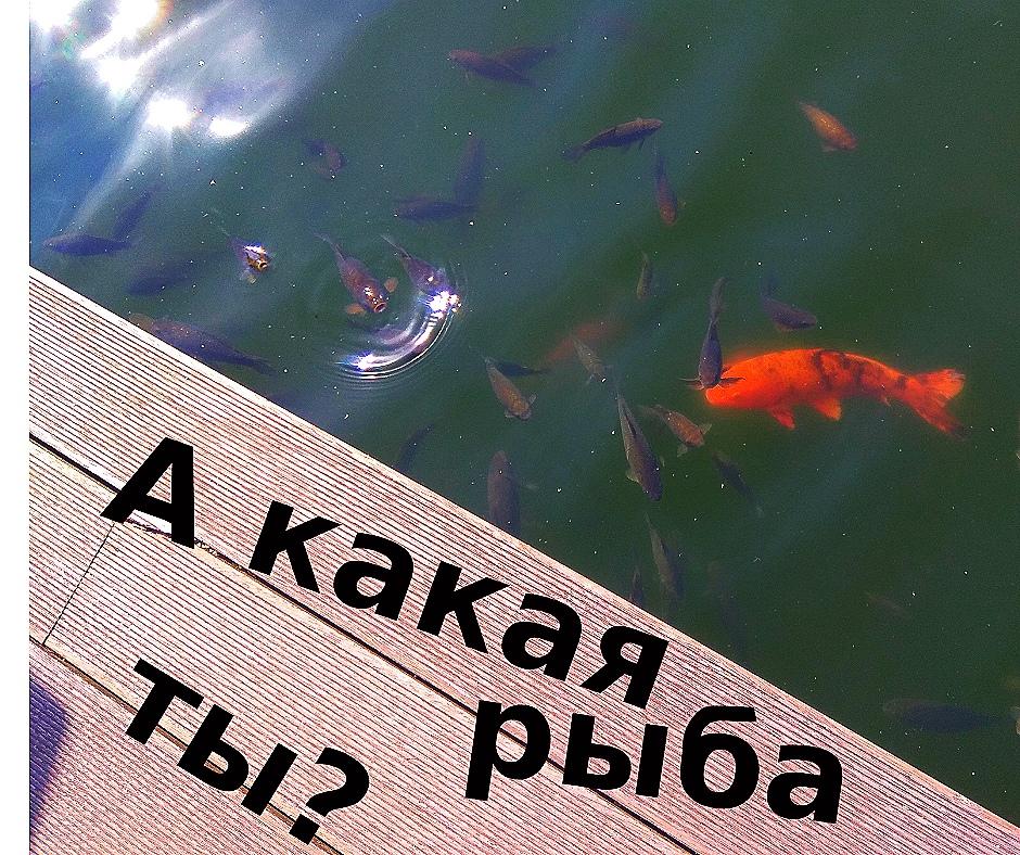 А какая рыба ты?