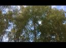 Красота осени и ветра с Листьями Дзен