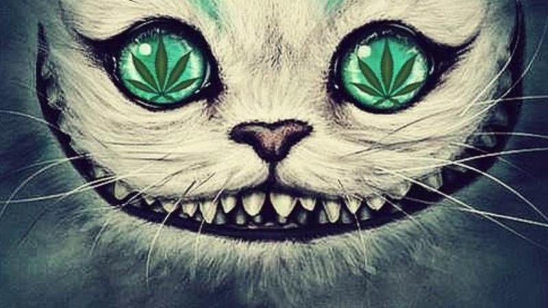 PSY 🎵 TECHNO 🎵 MINIMAL 🎵EDM 🎵 TRIPPY CAT NEXT LEVEL 2019 MUSIC MIX