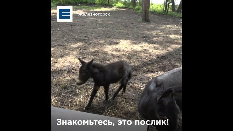 В Железногорском зоосаде впервые родился необычный малыш