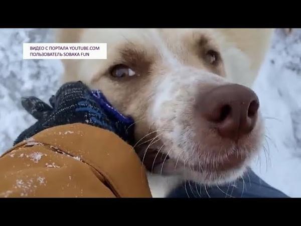 Волонтер из Нижневартовска спас собачью семью от смерти на морозе