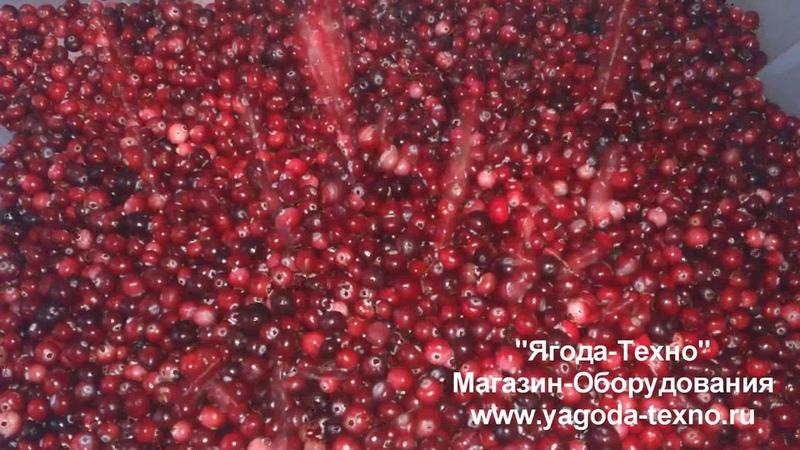 Веялка для очистки ягод Брус 500 Быстрая очистка клюквы Ягода Техно