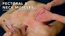 How to Properly Massage Pec and Neck Muscles