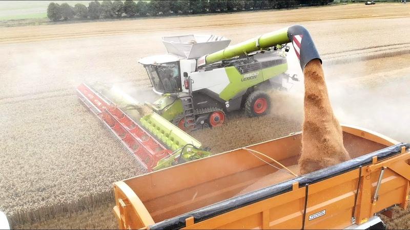 The New Claas Lexion 8800 Convio Flex 1380 Harvesting Wheat 🌾☀️