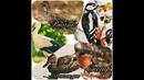 Как говорят животные, детское развивающее видео для самых маленьких детей про птиц