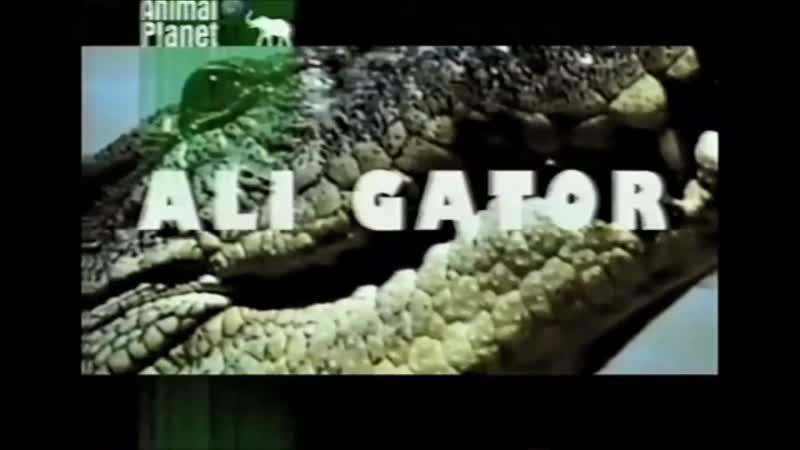 Проморолик канала Animal Planet 1998-2000 г. {9}