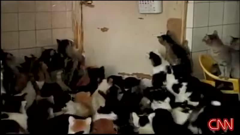 Больная на голову бабка и ее 120 кошек