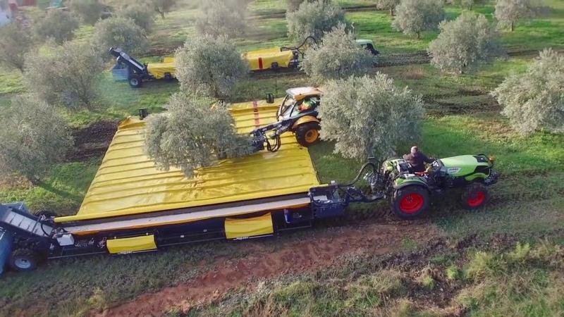 Сбор оливок специальными машинами