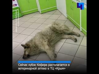 Кефир, который победил: Бездомный пес из Соснового Бора стал лучшей собакой 2019