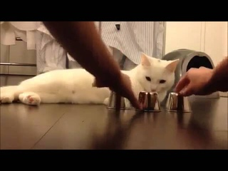 Кручу   верчу, кота запутать хочу!