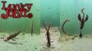 Силикон Lucky John игра приманок под водой Часть 2 Раки Черви Слаги