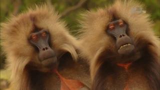 В дебрях Африки. Эфиопия.Дикая природа Африки. Док фильм Nat Geo Wild