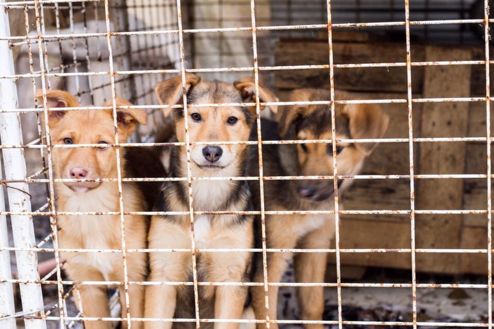 Информация по отлову безнадзорных животных на территории Волховского района в апреле 2019 года