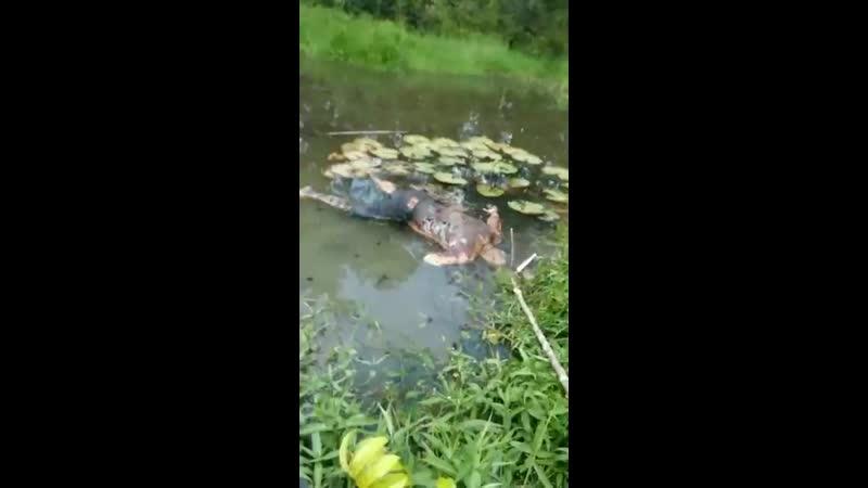 Убийца выбросил искалеченный труп мужика в болото.