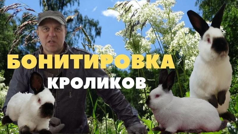 Взвешивание калифорнийских крольчат из многочисленных окролов/Привес Бургундских кроликов
