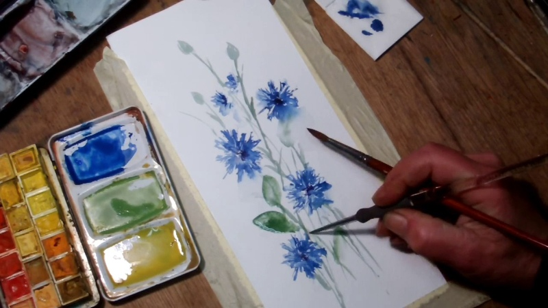 Hedwig's Art Tutorial cornflower watercolor real time